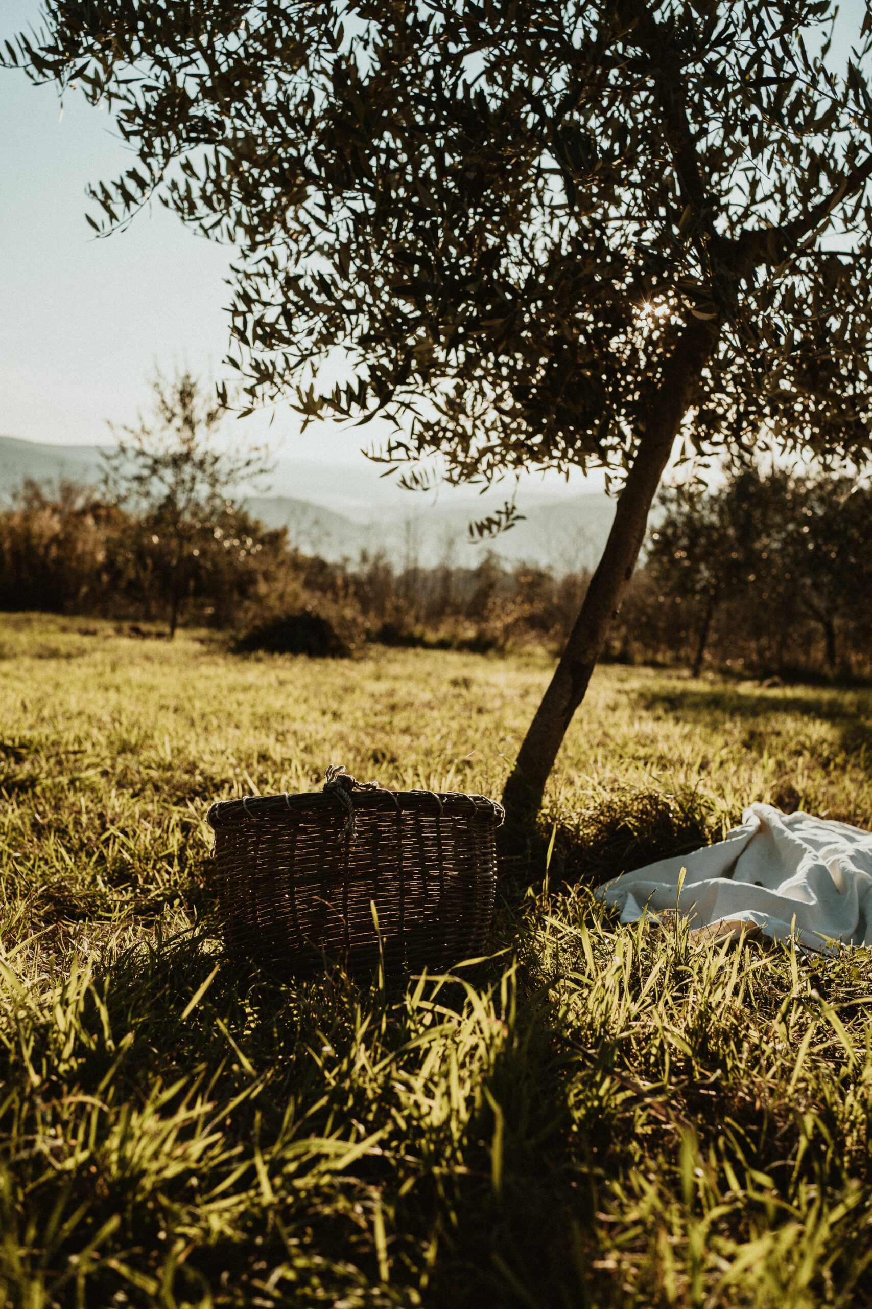 family photographer tuscany 24 scaled